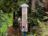 Blue tit on feeding station