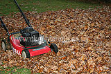 Making leaf mould (2)
