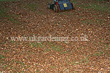 Making leaf mould (4)