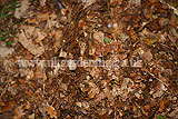 Making leaf mould (5)