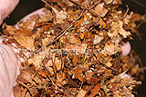 Making leaf mould (9)