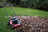 Making leaf mould