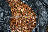 Making leaf mould (16)