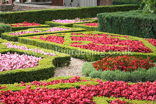 Roses In Garden: A Photo Of Formal Garden In Hampton Court Palace Gardens
