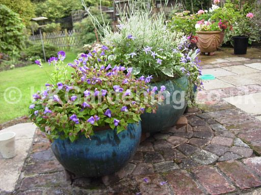 Patio planter with a lilac theme