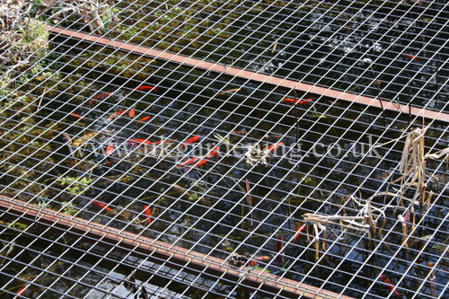 A photo of pond cover to protect the fish from the heron for Fish pond protection