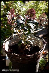 Place the main focal plant in the middle of the basket