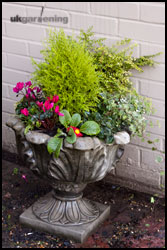 A planted up container, using a small conifer as a focal plant